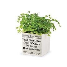 Really Great News Ceramic Planter