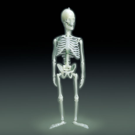 Glow-in-the-Dark Human Skeleton