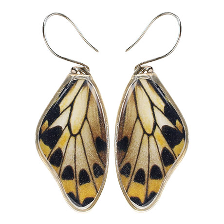 Wallace's Golden Birdwing Butterfly Wing Earrings