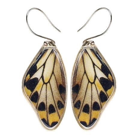 Wallace's Golden Birdwing Butterfly Wing Earrings