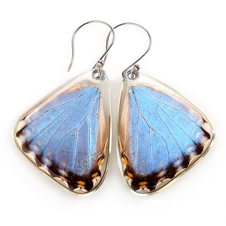 Blue Morpho Portis Butterfly Earrings