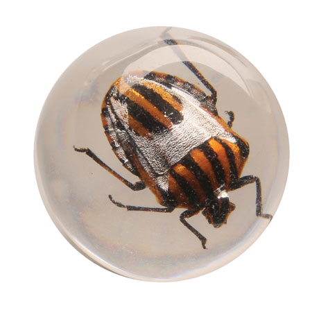 Instant Insect Collections - 10 marbles