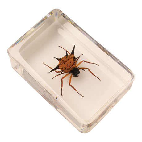 Instant Insect Collections - 12 cubes