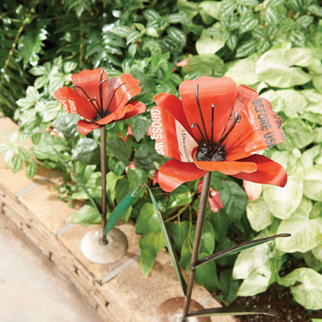 Blooming Poppies Garden