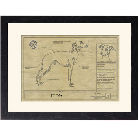 Personalized Framed Dog Breed Architectural Renderings - Italian Greyhound