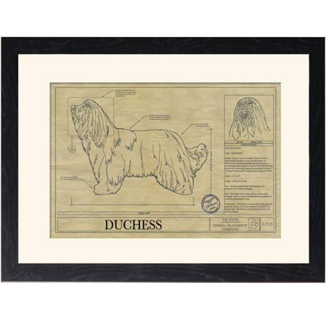 Personalized Framed Dog Breed Architectural Renderings - Bearded Collie
