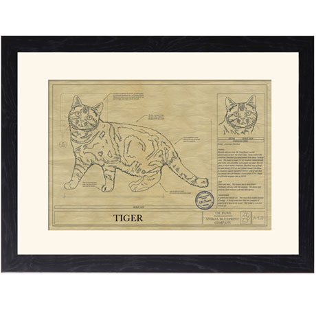 Personalized Framed Cat Breed Architectural Renderings - American Shorthair