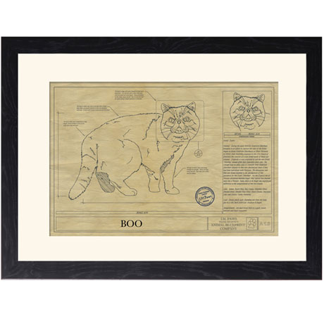 Personalized Framed Cat Breed Architectural Renderings - Exotic