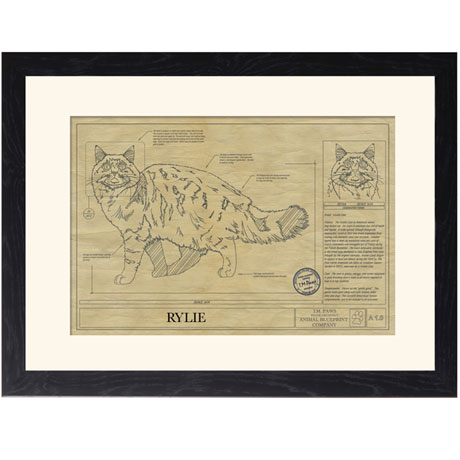 Personalized Framed Cat Breed Architectural Renderings - Maine Coon